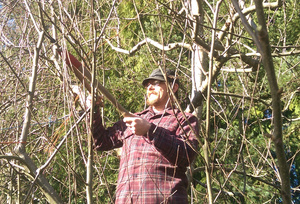 brush pruning