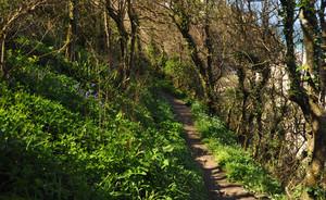 path work